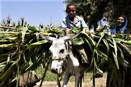 Nearing an End Game: How Climate Change Is Irreversibly Damaging Agriculture in MENA