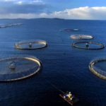 The Rise of Fish Farming in Over-Fished Gulf Nations