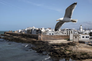 A seagull flies over the ancient medina of Essaouira Morocco. The city is best known for its 18th century ramparts surrounding its old Medina town. AP Photo Mosaab Elshamy