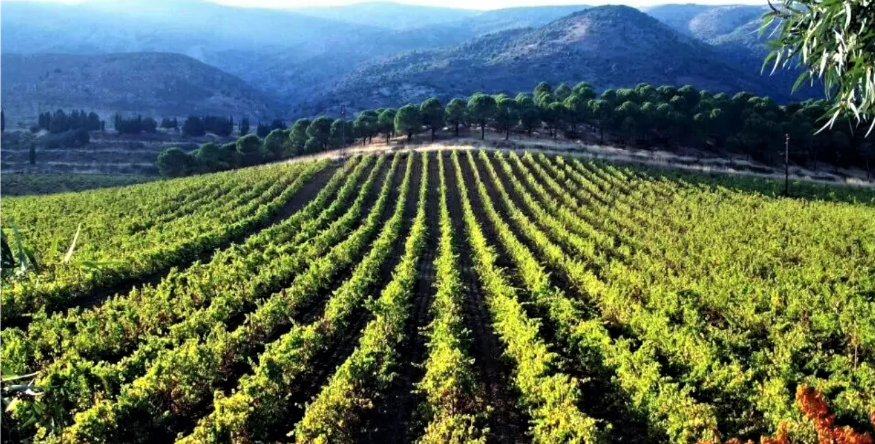 'Wine and War' Captures Lebanon's Spirit of Resilience