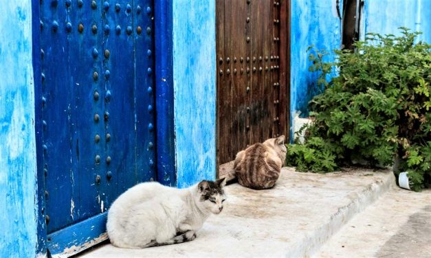 The Importance of Cats in Morocco—and Islam