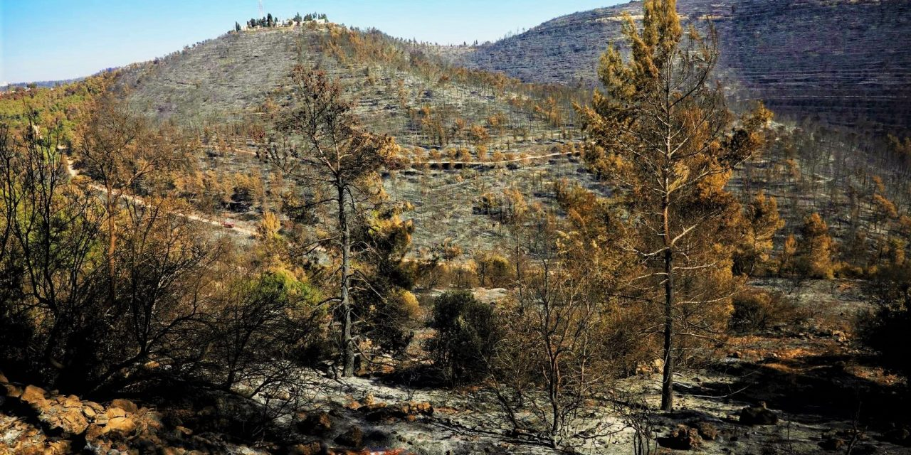 'Green Zionism' Buries Palestinian Memory Through Forestation