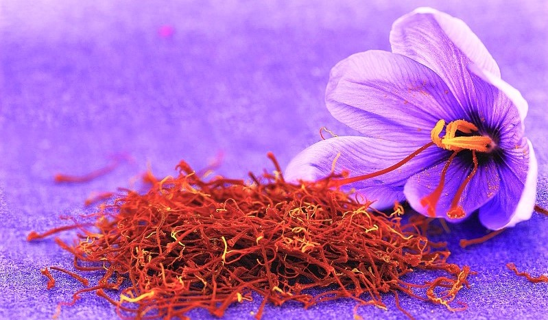Saffron, the Red Gold of Morocco, Brings Financial Independence to Rural Families