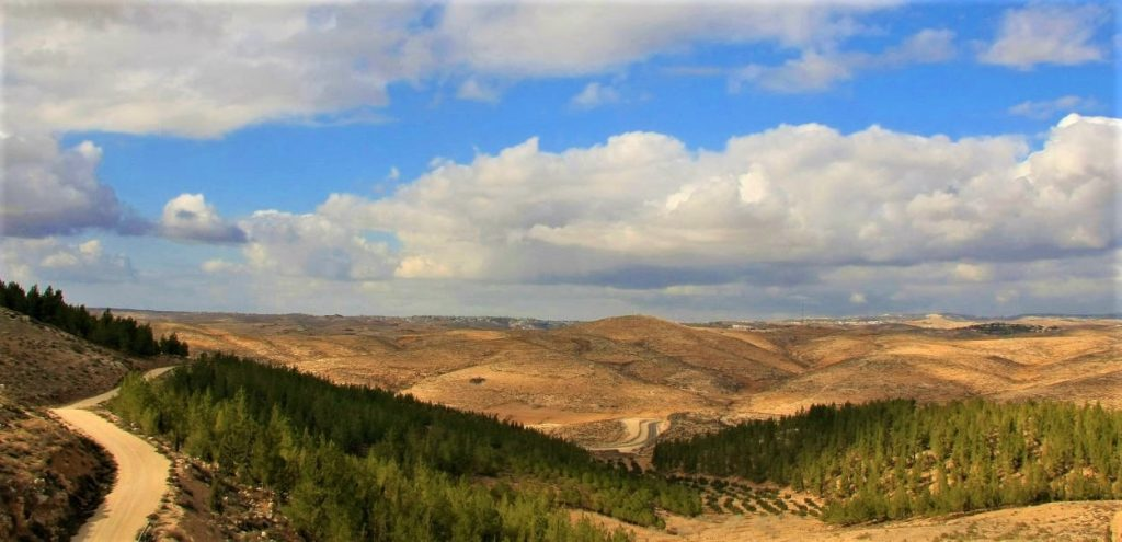 Israel forests Palestinians